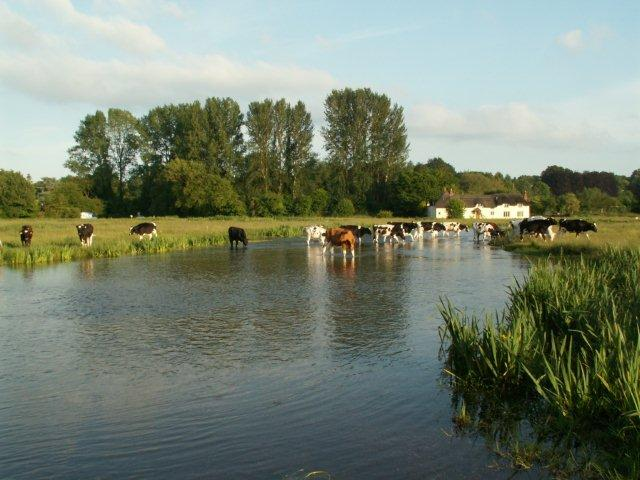 Chilbolton Common - Cows Crossing River Test
